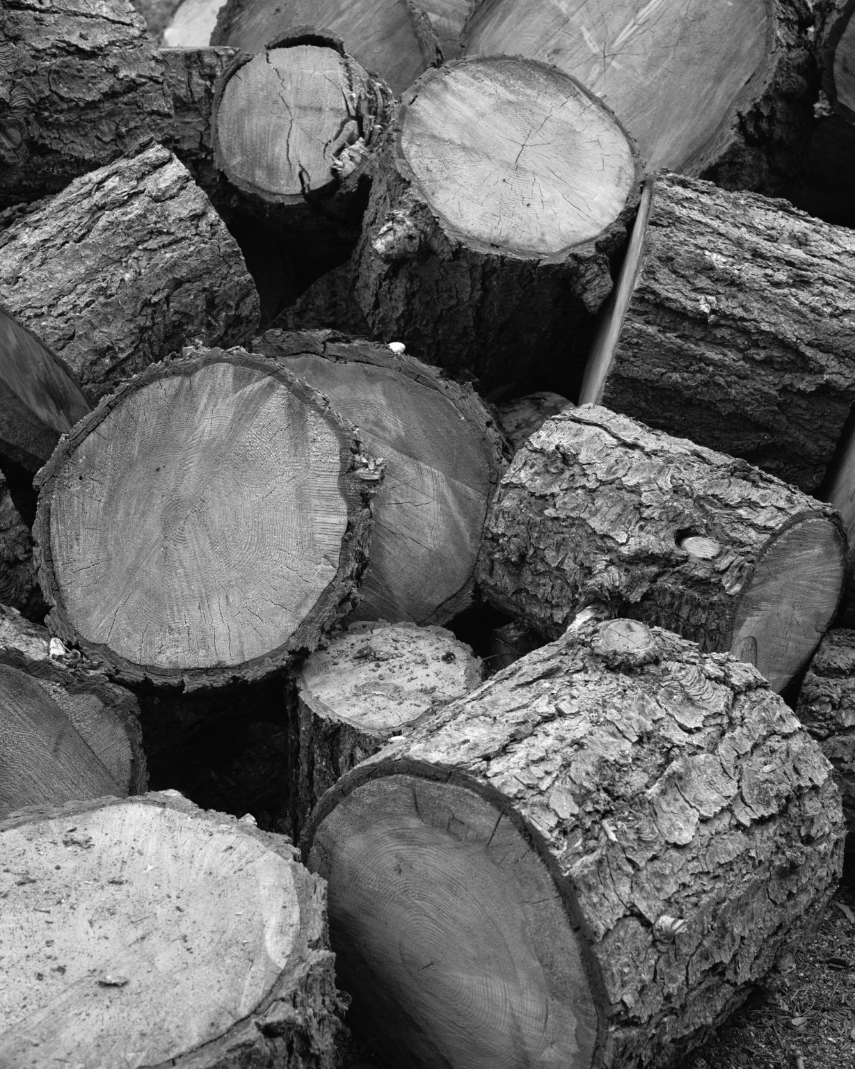 Pile of cut trees. California 2019