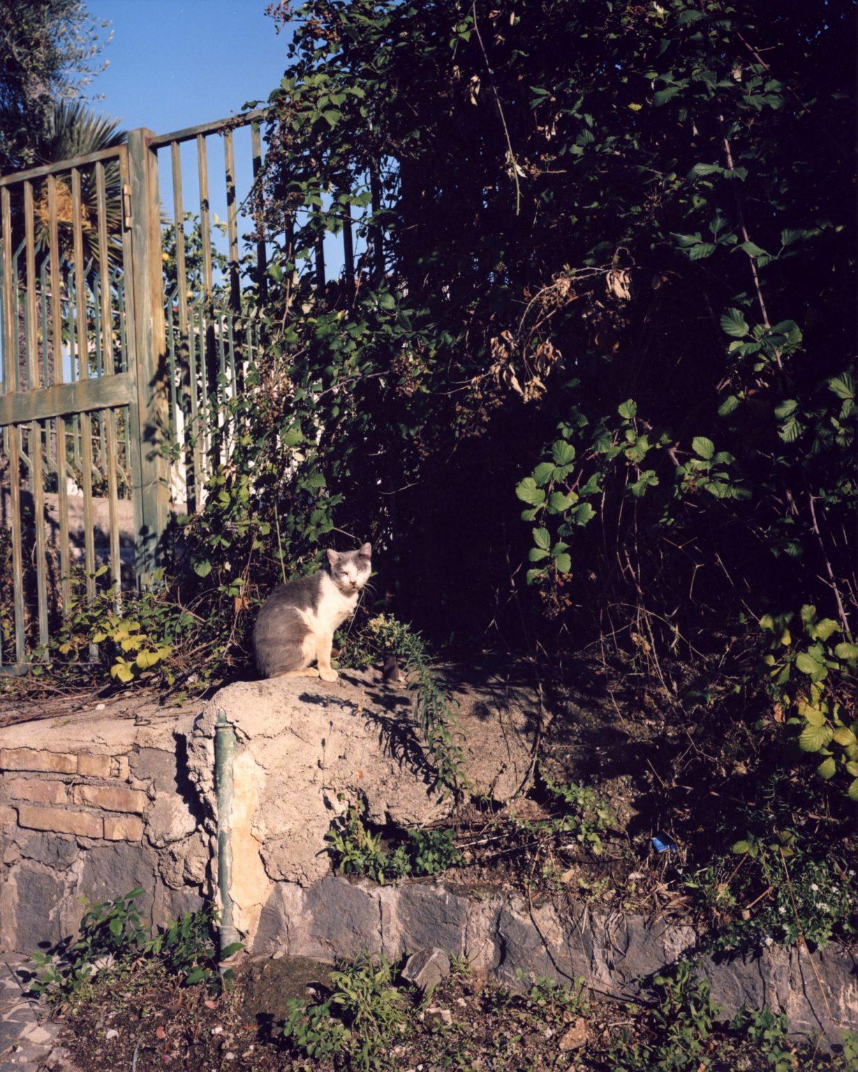 Stray cat outside of a villa. Paesi Vesuviani, Province of Naples. 2020