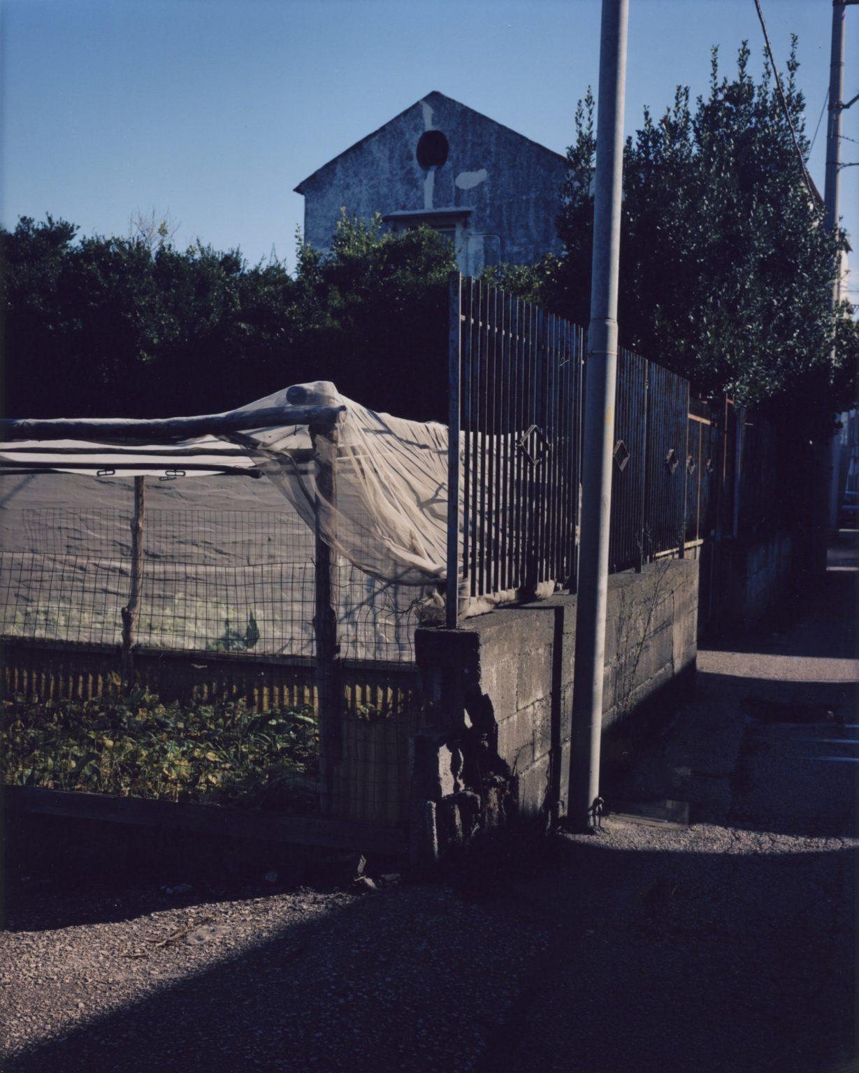 Small corner dedicated to a vegetable garden. Peasi Vesuviani, Province of Naples. 2020