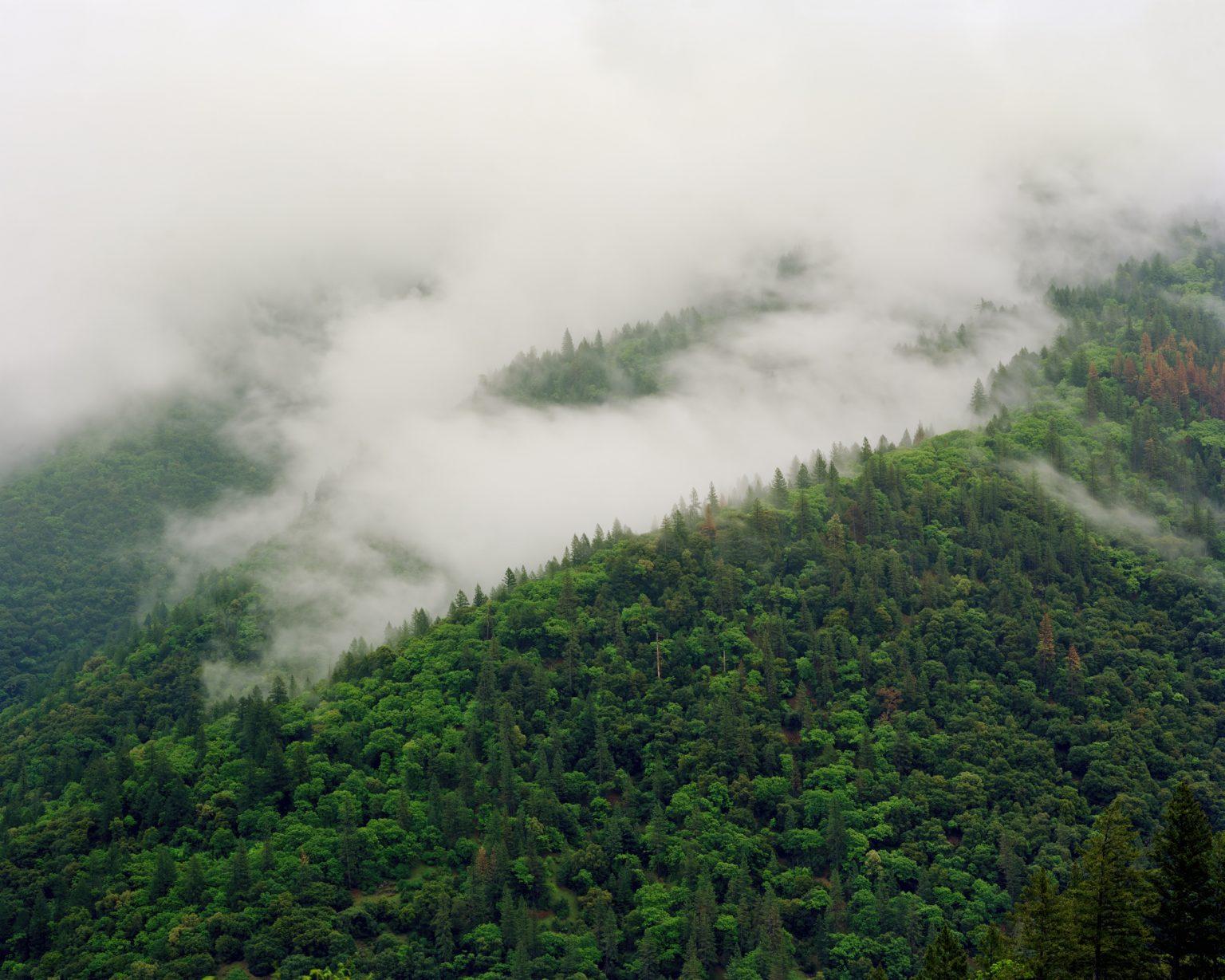 paradise-fog