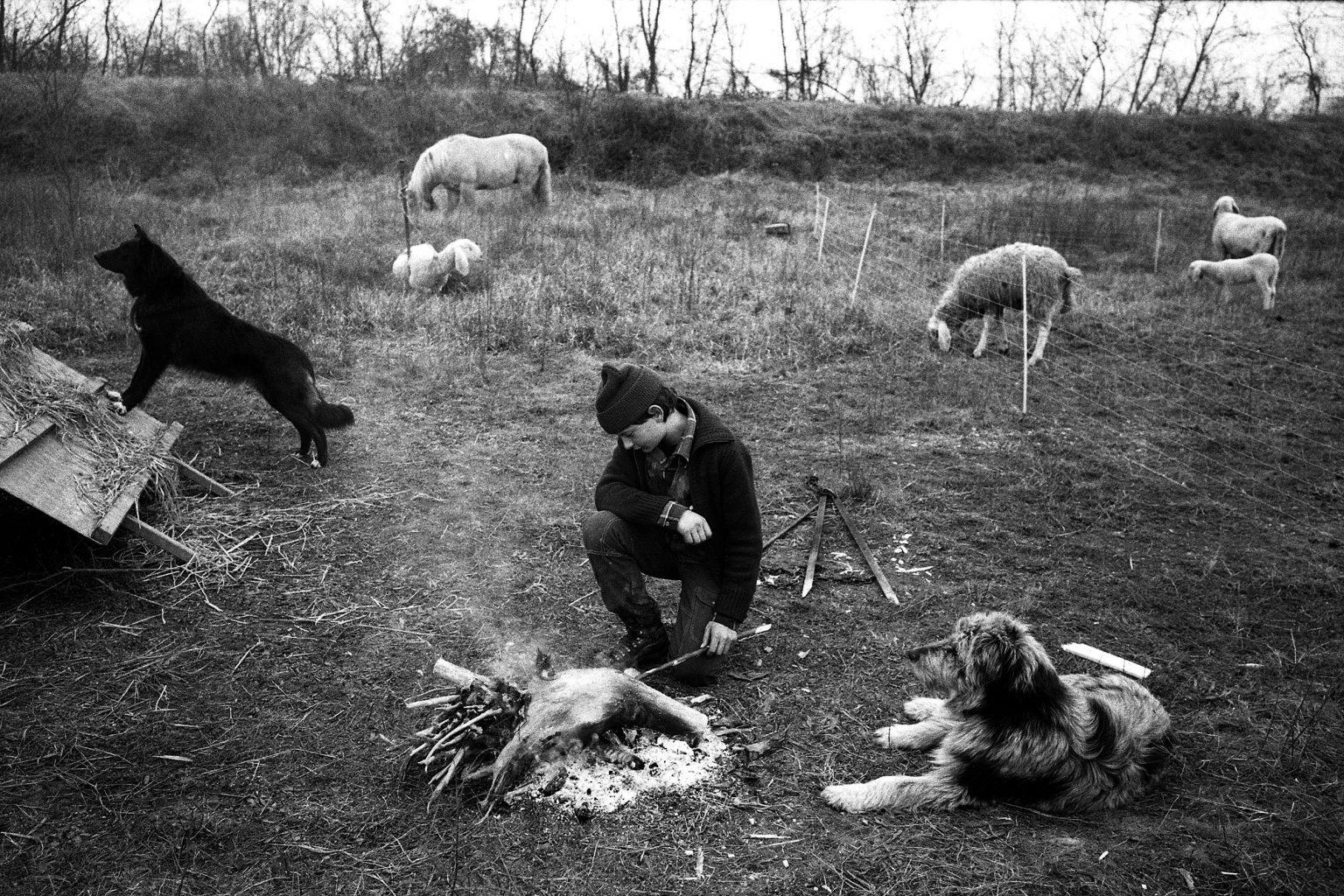 shepherd-pastore