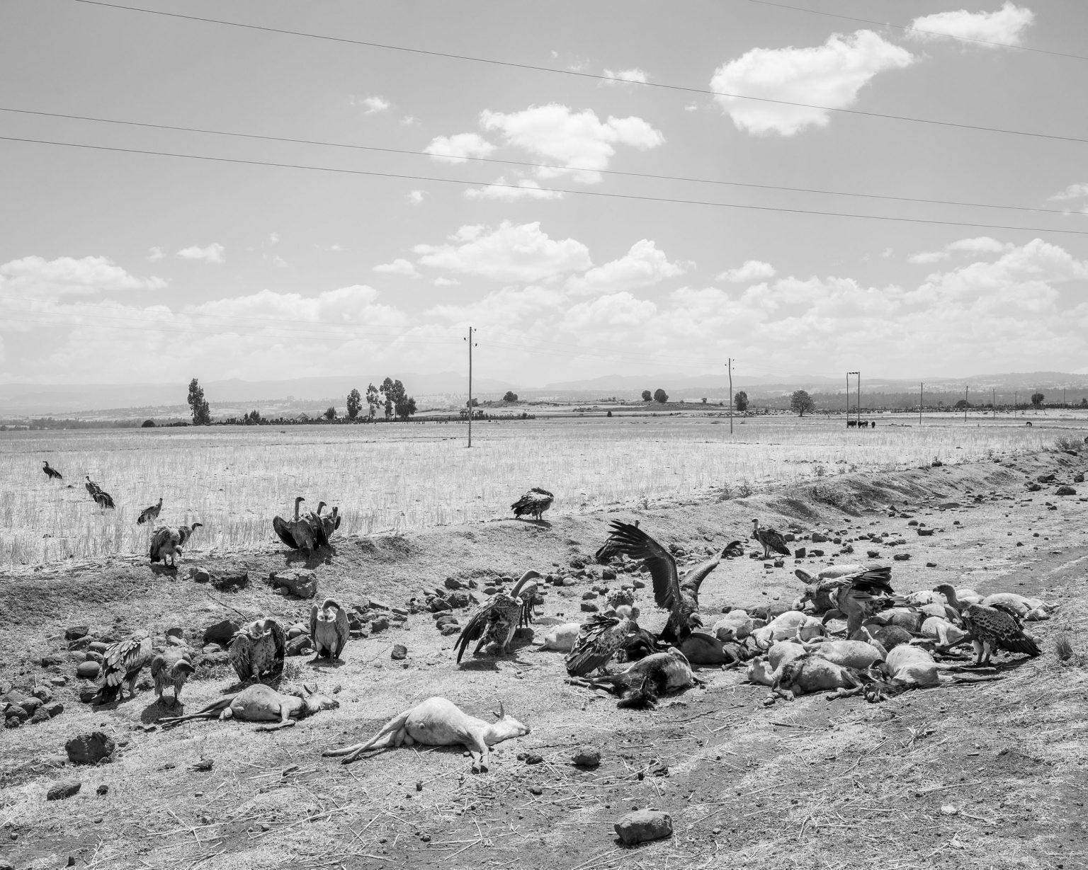 febbraio-2016-etiopia-sulla-strada-da-addis-abeba-verso-goba-regione-delloromia-february-2016-ethiopia-on-the-road-from-addis-ababa-to-goba-oromia-region