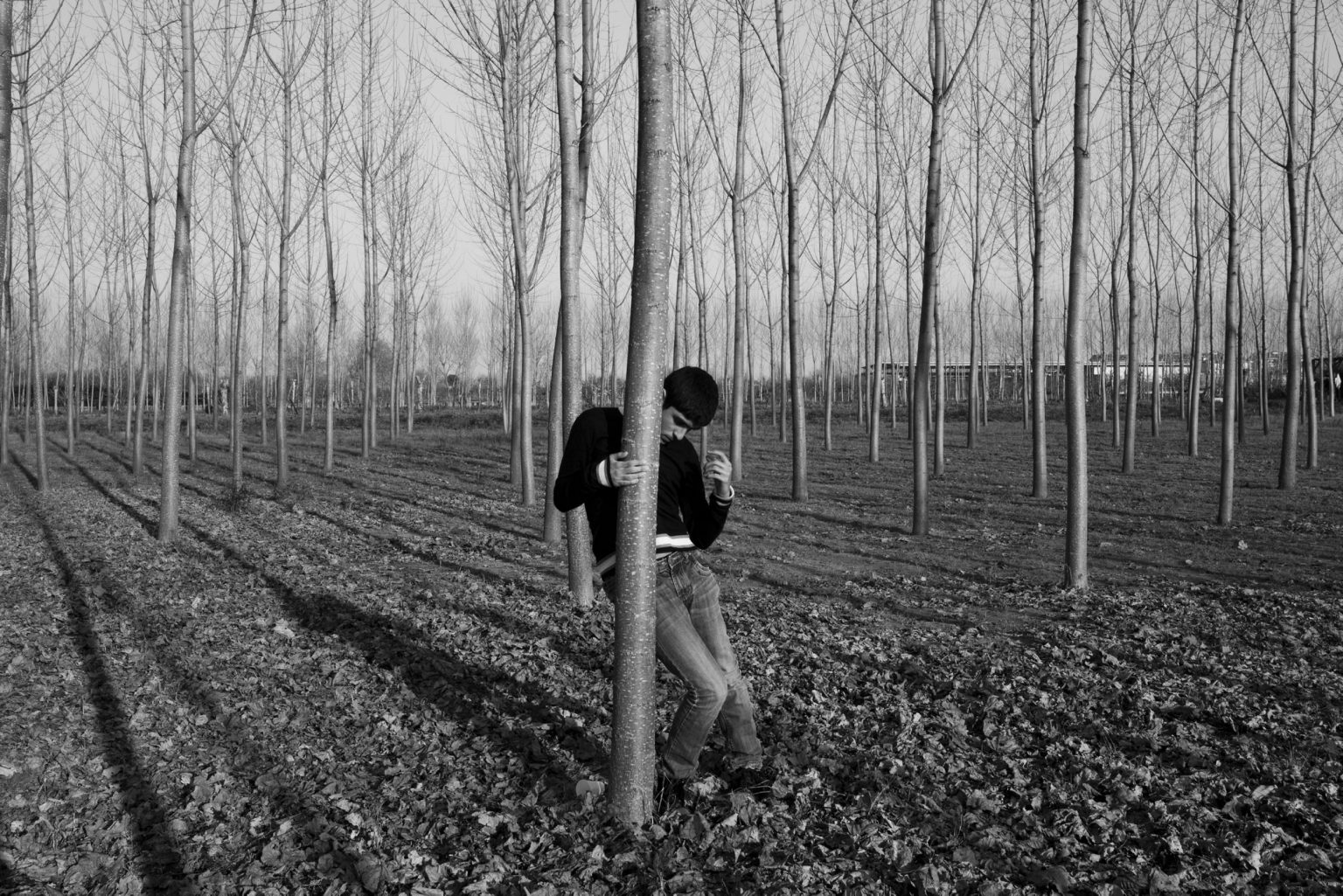 Gennaro spends an afternoon in the family poplar grove. Casal di Principe, Caserta, Italy, 2014
