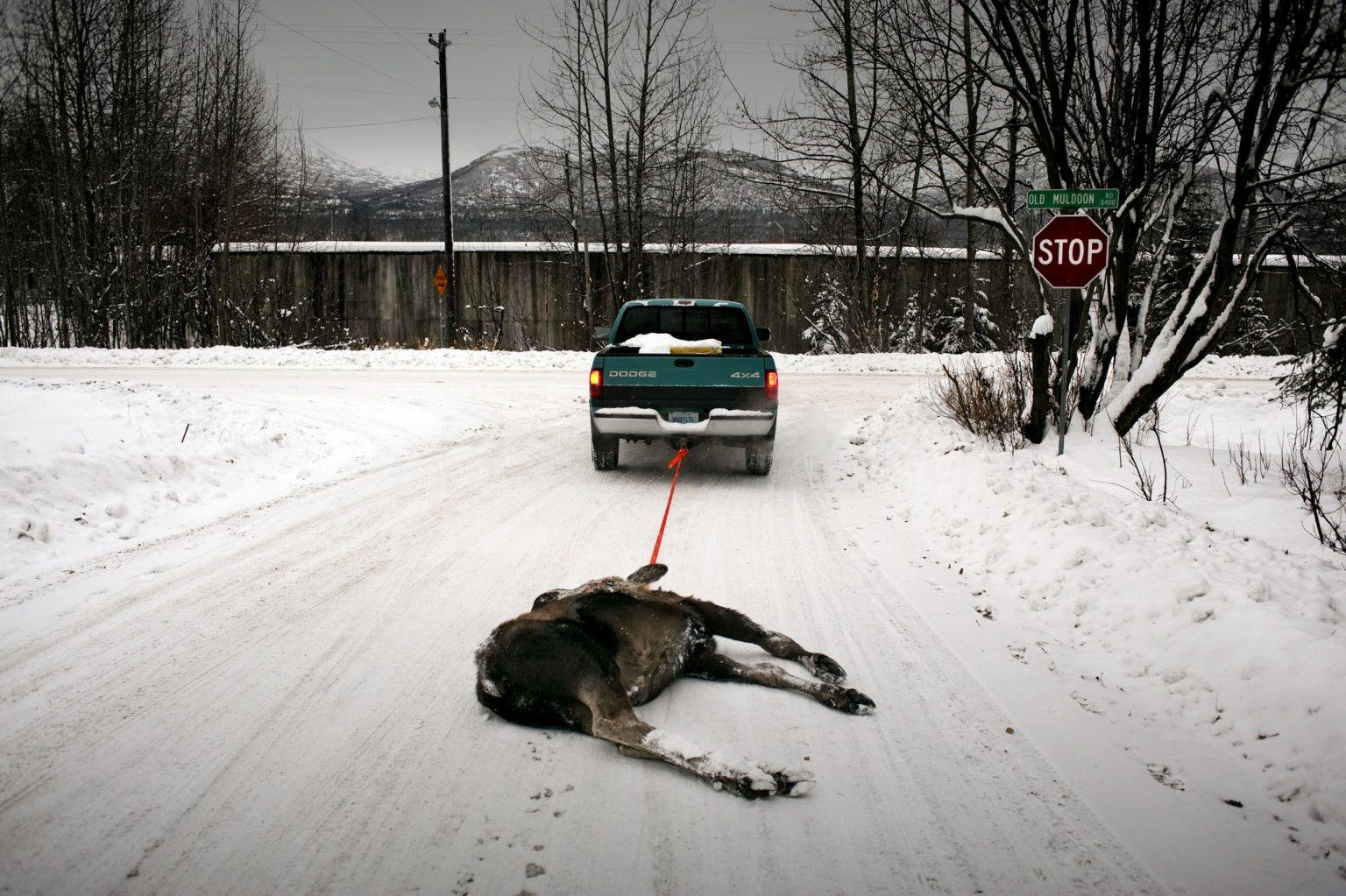 the-roadkill-program