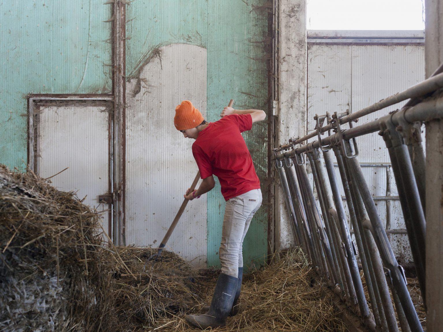 Accumoli, febbraio 2021 Elisa Pica nella stalla dell'azienda agricola di famiglia Alta Montagna Bio. Prima delle lezioni, al mattino, Elisa si occupa della stalla dei bovini.