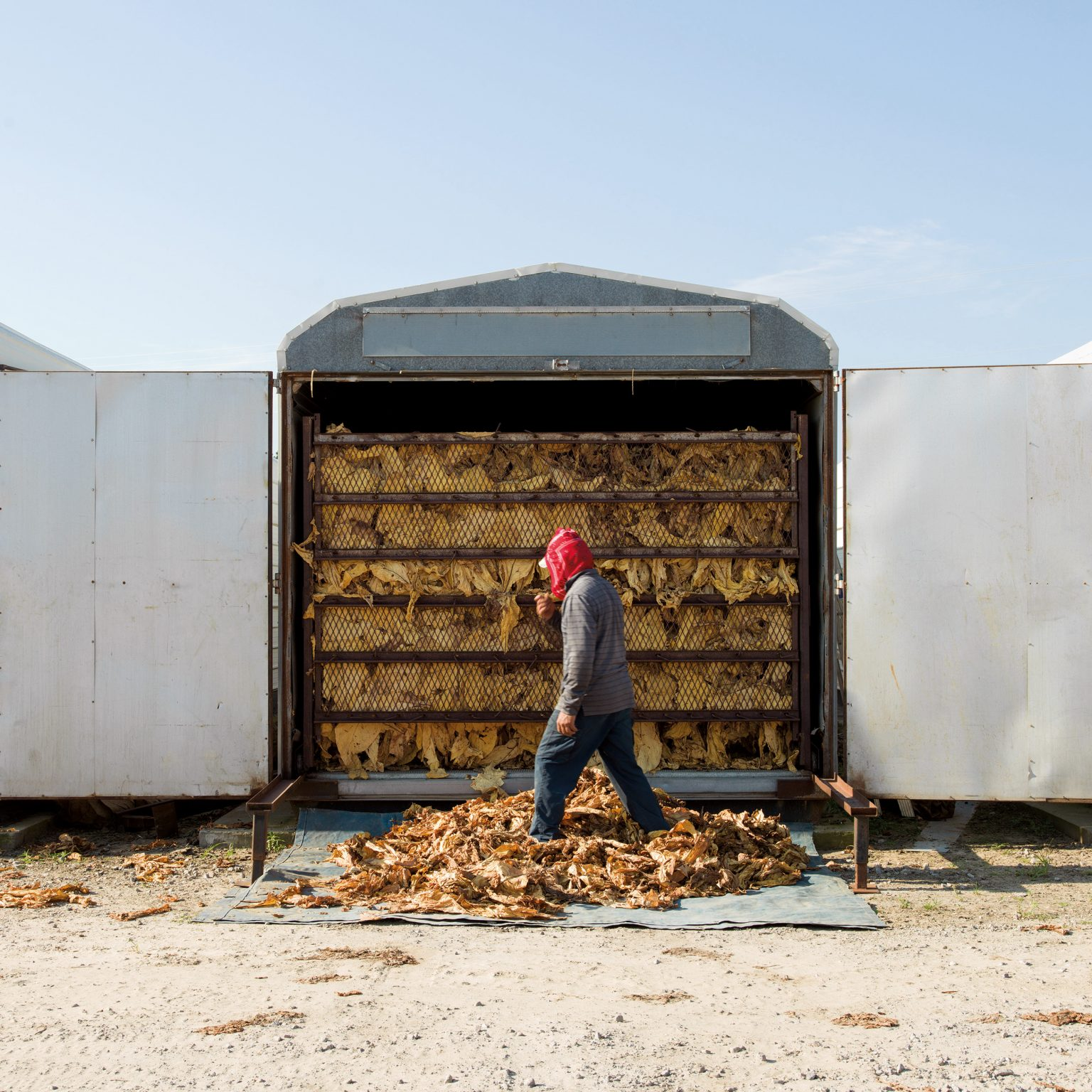 """Lucama, N.C., USA. Laborer in front of a curing barn at Sullivan Farms. Leaves will dry, getting ready to be sold. With 650 acres of tobacco and 40 seasonal laborers working in the farm, the Randy Edwards estate is investing in more fuel-efficient curing machines. However, buying and running barns is expensive. Farmers complain for the increasingly lower prices paid by companies for tobacco leaves. """"If a pack if cigarettes is 5 USD, farmers get about 5 cents"""", says Randy Edwards."""