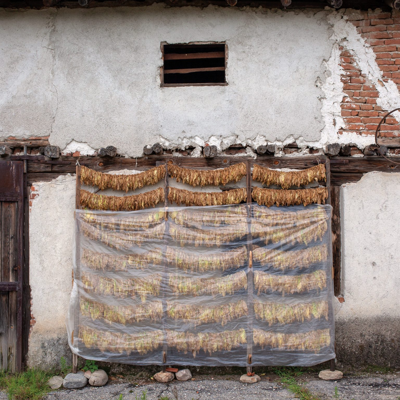 Marchevo, Bulgaria. Tobacco leaves drying next to a house. Most  Bulgarian tobacco farmers dry leaves at their homes; in most cases these represent the sole cash income for the year. Tobacco in the area is usually sold for USD 3.5 per kg.