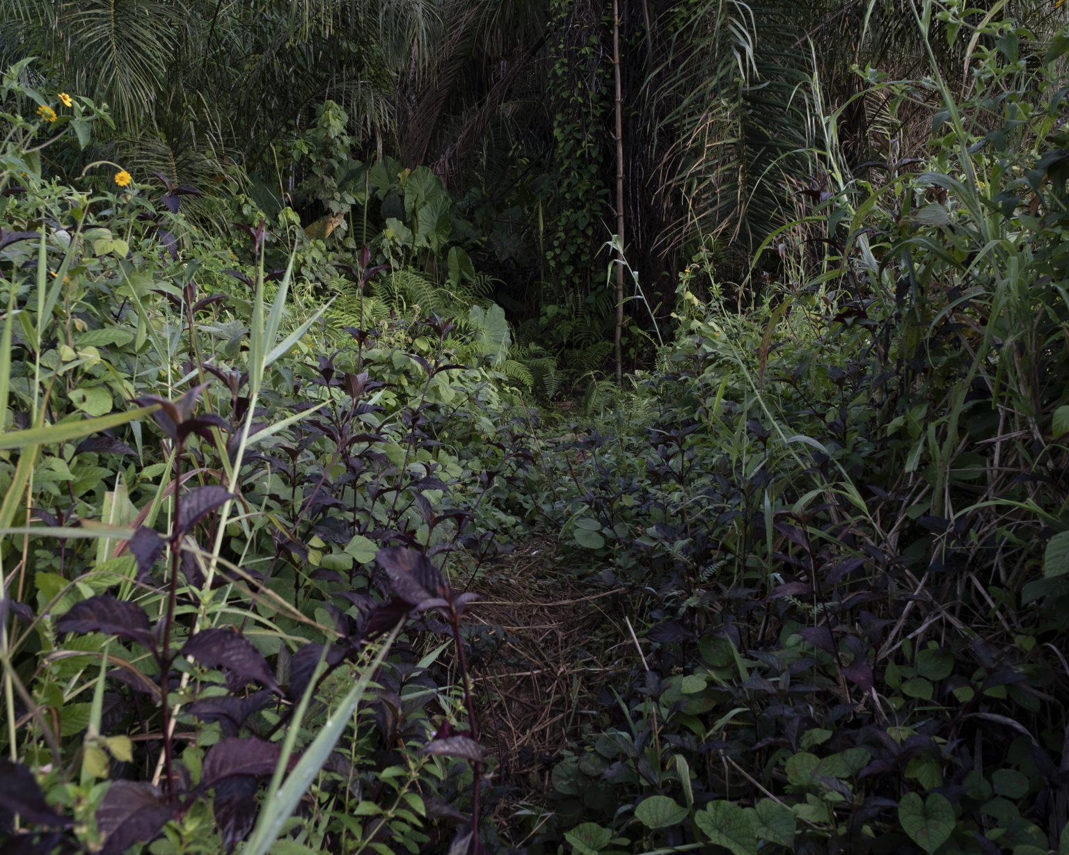 Northwestern Liberia, October 2019 - The forest surrounding a village. >< Liberia nord-occidentale, ottobre 2019 - Foresta che circonda un villaggio.