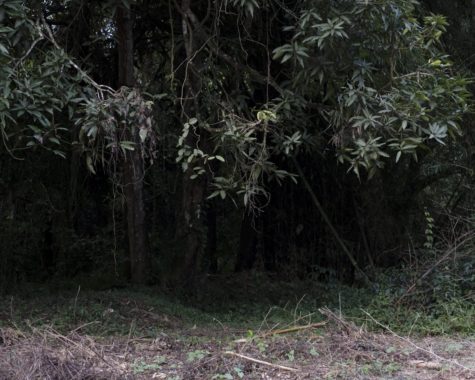 Northwestern Liberia, October 2019 - The equatorial forest where the Sande school is located. >< Liberia nord-occidentale, ottobre 2019 - La foresta equatoriale dove sorge la scuola Sande.