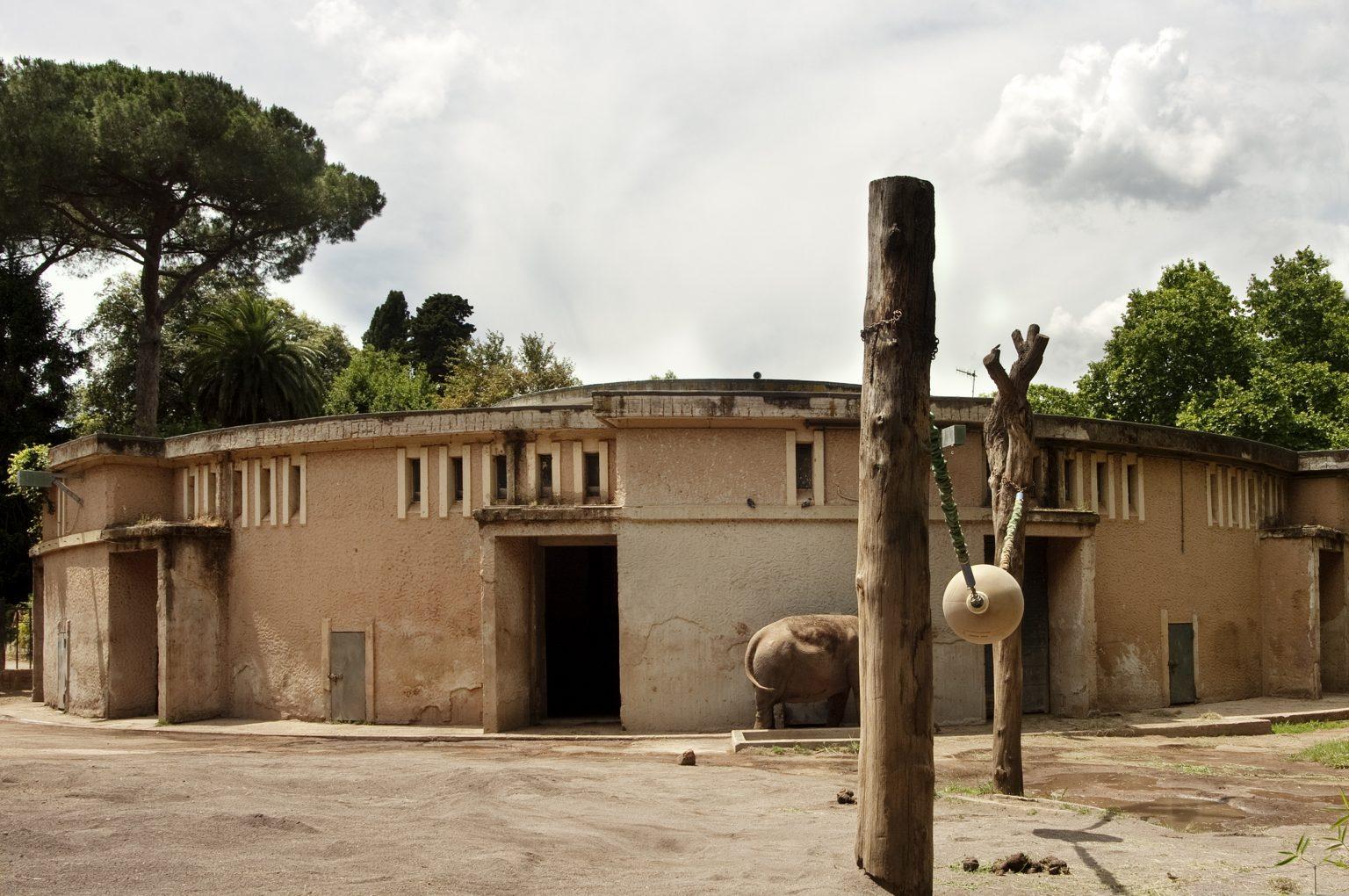 Rome, June 2011 - Bioparco, zoological garden, Asian elephant. >< Roma, giugno 2011 - Bioparco, giardino zoologico, elefante asiatico.