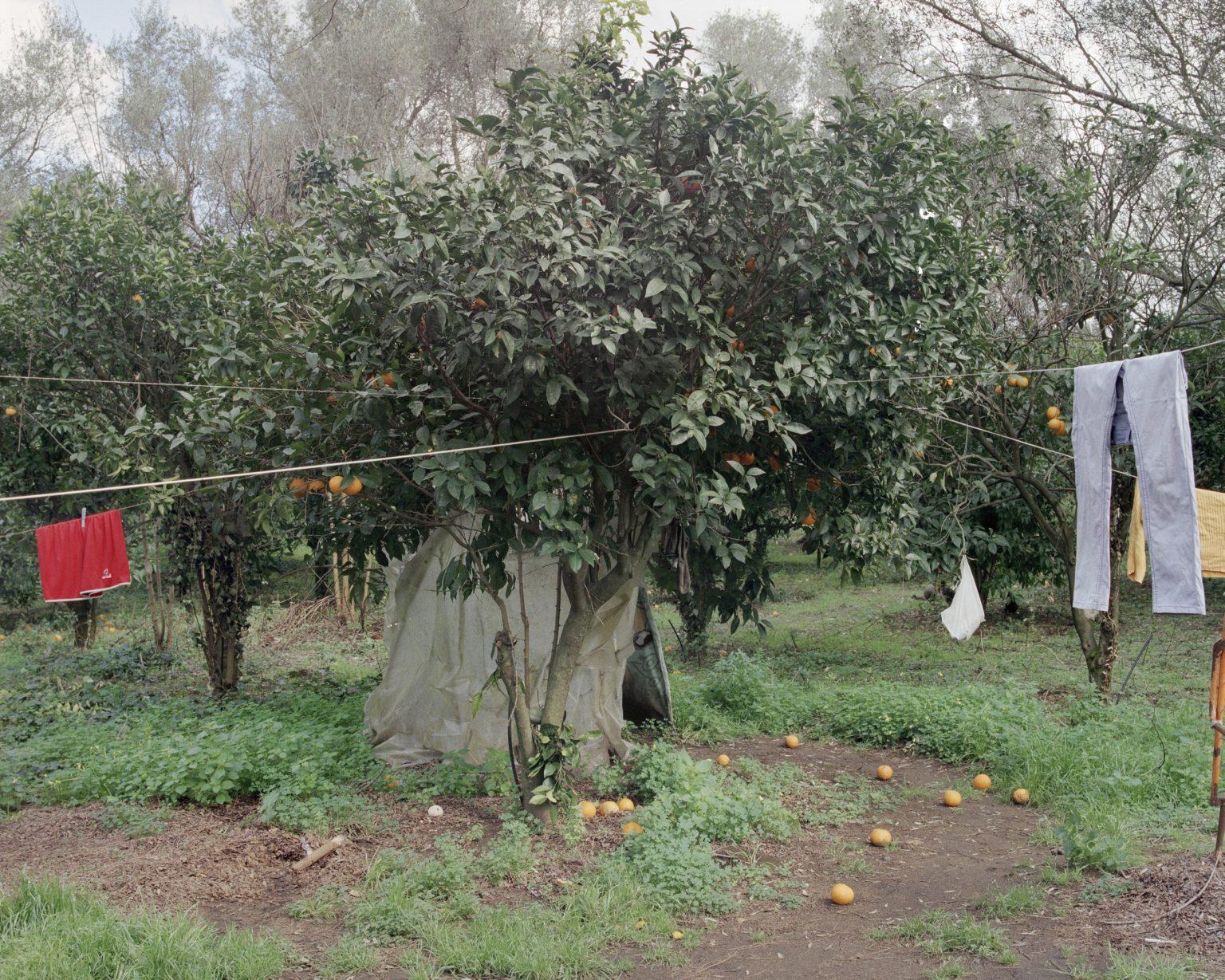"""Drosi (Gioia Tauro), 2016. Temporary shelter set in a citrus grove in the plain of Gioia Tauro. According to CGIL (union organization) in Italy there are about 400 thousand foreign daily laboures who find work through the """"caporalato"""" (system of directly hiring farm labour for very low wages by landowner's agents). ><  Drosi (Gioia Tauro), 2016. Rifugio temporaneo in un agrumeto della piana di Gioia Tauro. Secondo la CGIL in Italia sono circa 400 mila i lavoratori stagionali stranieri che trovano lavoro attraverso il caporalato."""