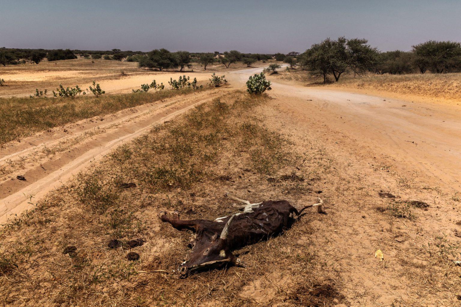 Africa, Chad, Bol, October 2018 - A severe humanitarian crisis is underway in the Lake Chad basin. Over two million refugees, as well as five million people are at risk of food insecurity and 500,000 children are suffering from acute malnutrition. Lake Chad is shrincking rapidly, due to desertification that is threatening the very existence of the people who live on its banks and the ecosystem of its waters. Chad was once the fourth largest lake in Africa. However, since the 1950s its surface has shrunk by 90%.>< Africa, Ciad, Bol, Ottobre 2018 - Una grave crisi umanitaria si sta abbattendo sul Lago Ciad. Oltre due milioni di rifugiati e cinque milioni di persone sono minacciati dall?insicurezza alimentare; 50,000 bambini soffrono di malnutrizione acuta. Il Lago Ciad si sta restringendo rapidamente per via della desertificazione che sta mettendo in pericolo l'esistenza stessa delle persone che vivono sulle sue sponde e l'ecosistema delle sue acque. Ciad era un tempo uno dei quattro laghi più grandi in Africa. Tuttavia, dal 1950 la superficie si è ridotta del 50%. *** SPECIAL   FEE   APPLIES *** *** Local Caption *** 01362904