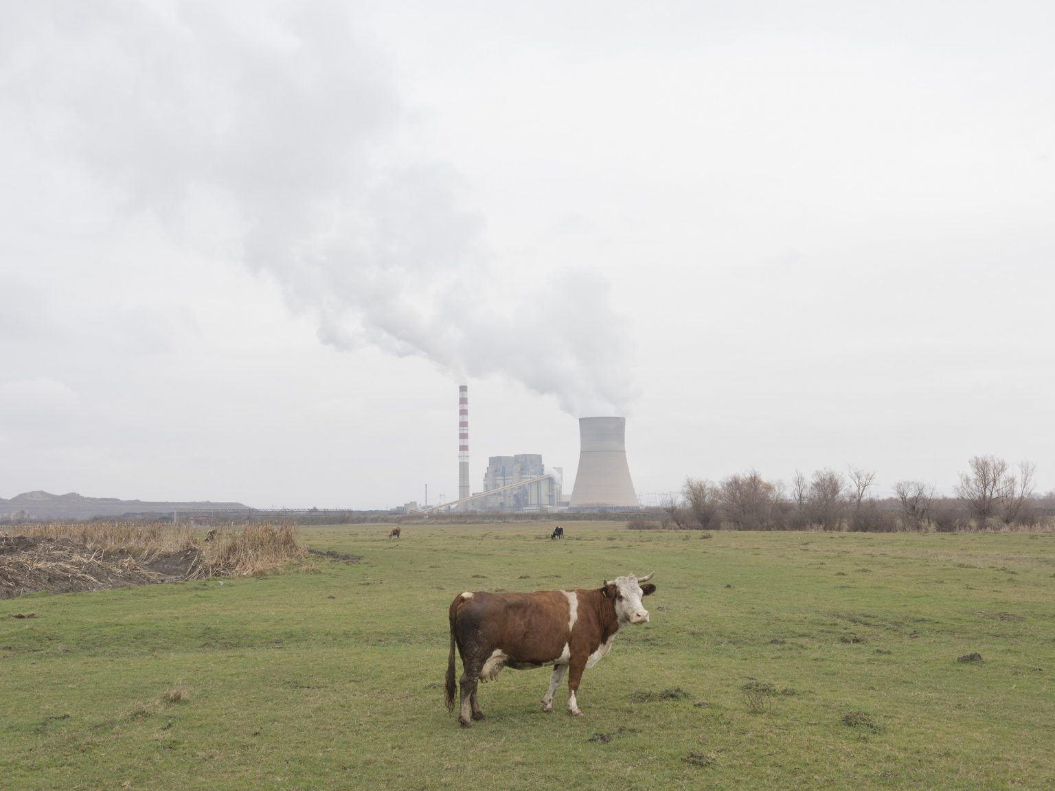 A cow grazing in front of the KEK power plant in Obiliq/Obilić. Powered by lignite, obsolete and lacking maintenance after the war, the plant is very inefficient and is one of the main sources of pollution in the area.