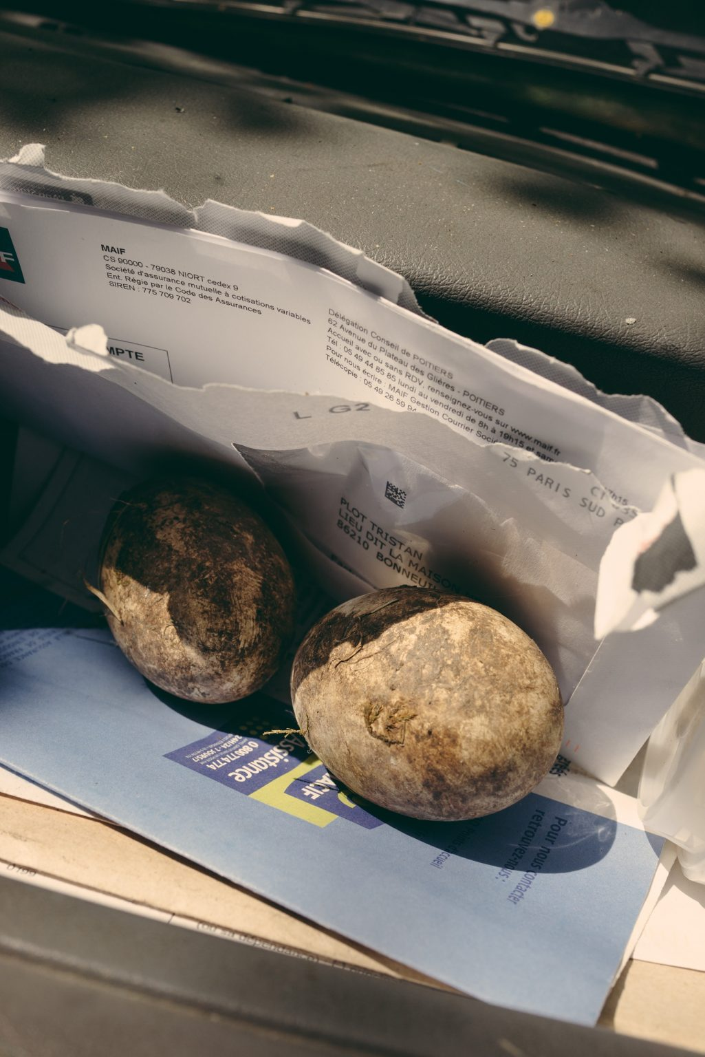 Valdivienne, France, May 2019 - Mildred's eggs during the transfer of the nest in Tristan's new home, on the dashboard of the truck along with the bills. ><  Valdivienne,, Francia, maggio 2019 - Le uova di Mildred durante il trasferimento del nido nella nuova casa di Tristan, sul cruscotto del camion insieme alle bollette.*** SPECIAL   FEE   APPLIES *** *** Local Caption *** 01489363
