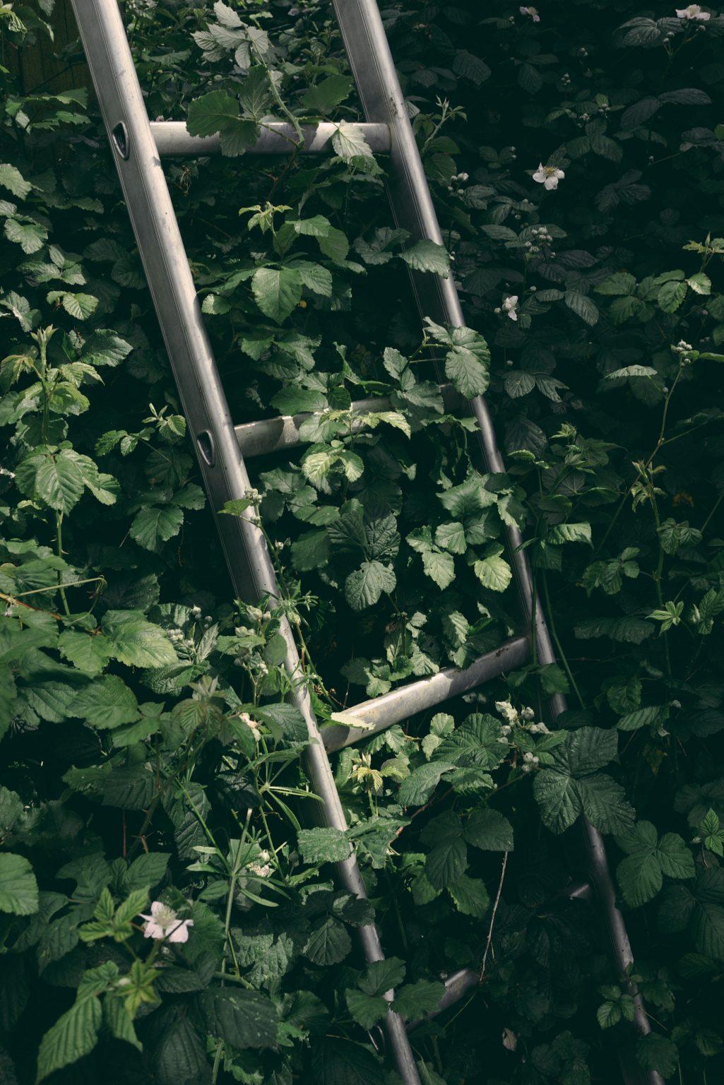 Valdivienne, France, May 2019 - A ladder used for the installation of the wooden pylons that support the corners of the aviaries. ><  Valdivienne, Francia, maggio 2019 - Una scala usata per l?istallazione dei tralicci di legno che sostengono gli angoli delle voliere.*** SPECIAL   FEE   APPLIES *** *** Local Caption *** 01489349