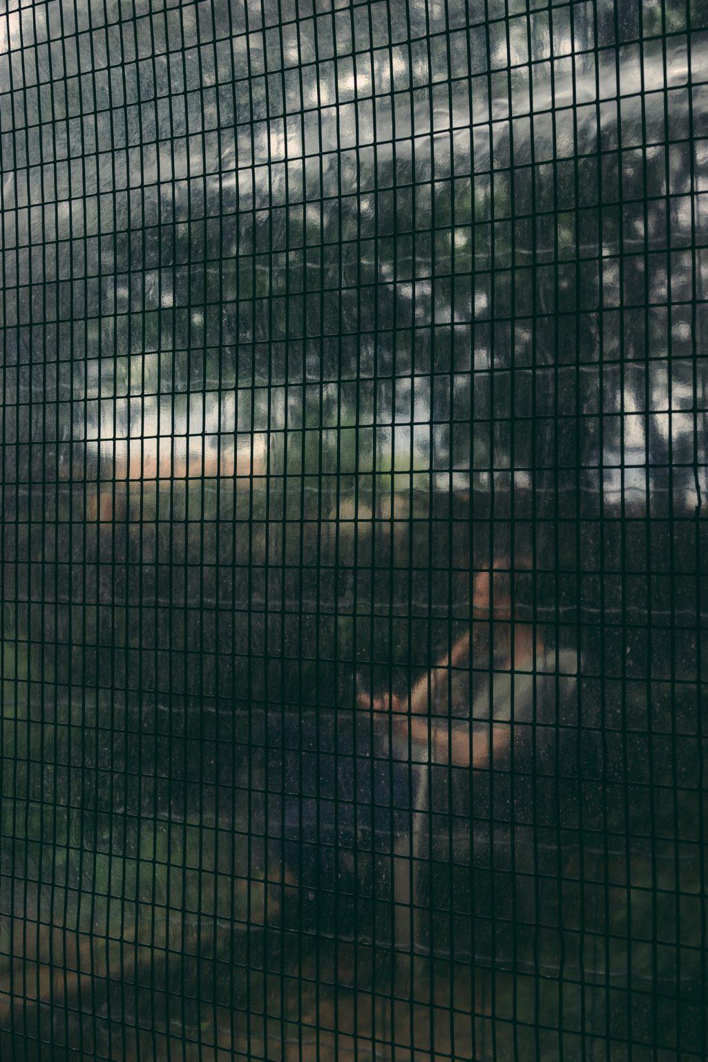 Valdivienne, France, May 2019 - Tristan Plot seen from inside the canary aviary. ><  Valdivienne, Francia, maggio 2019 - Tristan Plot visto dall'interno della voliera dei canarini.*** SPECIAL   FEE   APPLIES *** *** Local Caption *** 01489344