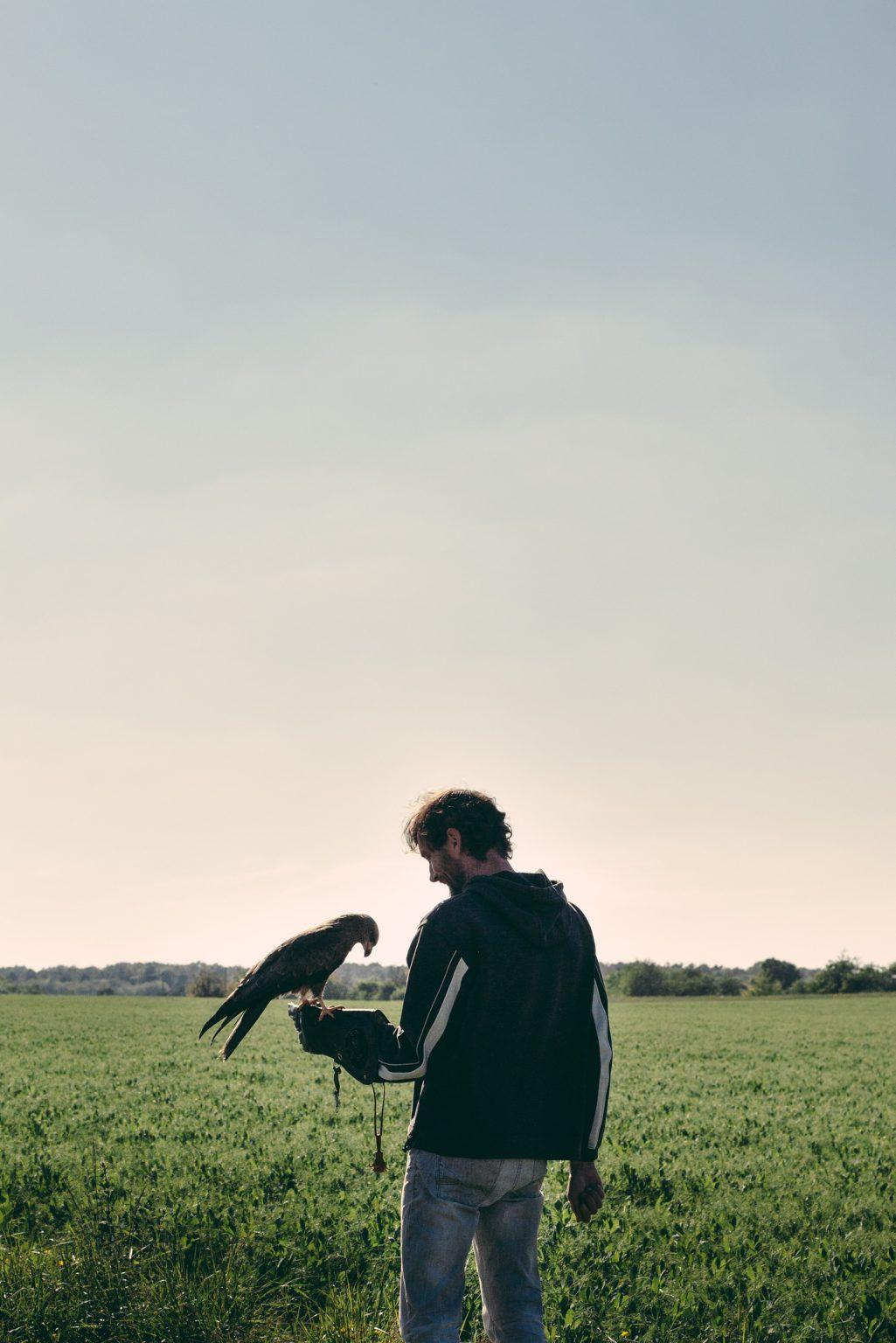 Bonneuil-Matours, France, May 2017 - La Maison Neuve.Tristan Plot with the black kite Elypse. ><  Bonneuil-Matours,, Francia, maggio 2017 - La Maison Neuve. Tristan Plot con il nibbio nero Elypse.*** SPECIAL   FEE   APPLIES *** *** Local Caption *** 01489341