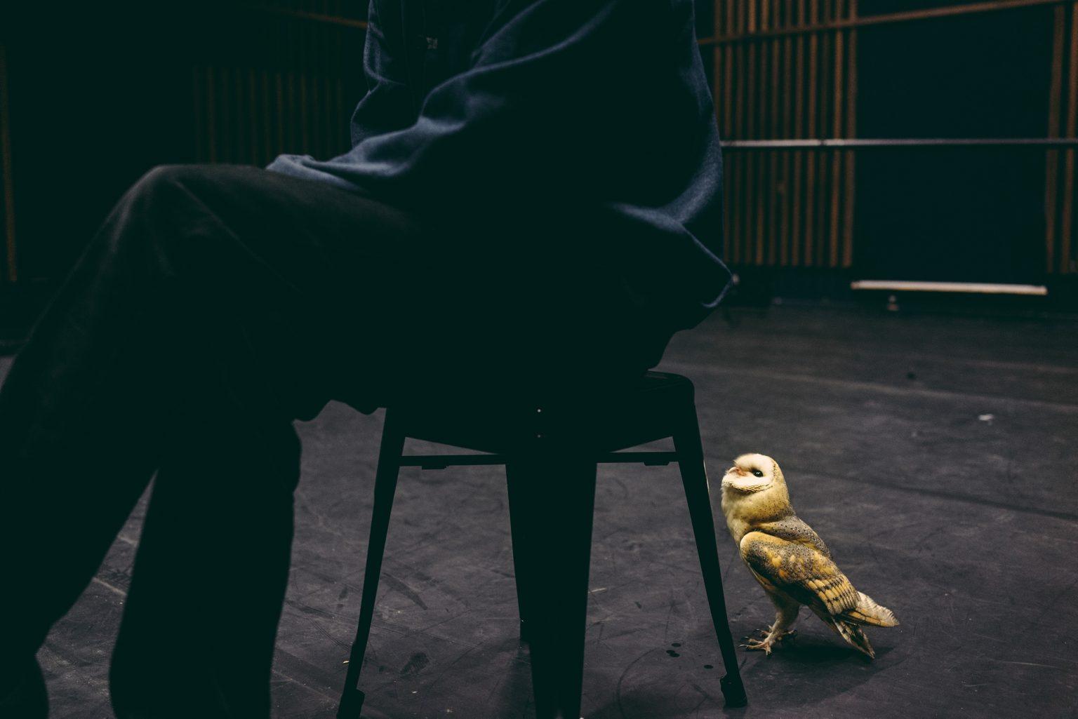 """Paris, France, January 2017 - Tristan Plot and the barn owl Boubo during rehearsals for Pascal Quignard's show """"La Rive dans le Noir"""" at 104 Paris. The play involves the barn owl Boubo, representative of the Night, and the crow Bayo, representative of the Day. ><  Parigi, Francia, gennaio 2017 - Tristan Plot e il barbagianni Boubo durante le prove dello spettacolo di Pascal Quignard """"La Rive dans le Noir"""" al centro culturale 104 di Parigi. Nello spettacolo sono coinvolti il barbagianni Boubo, come rappresentante della Notte, e la cornacchia Bayo, come rappresentante del Giorno.*** SPECIAL   FEE   APPLIES *** *** Local Caption *** 01489330"""