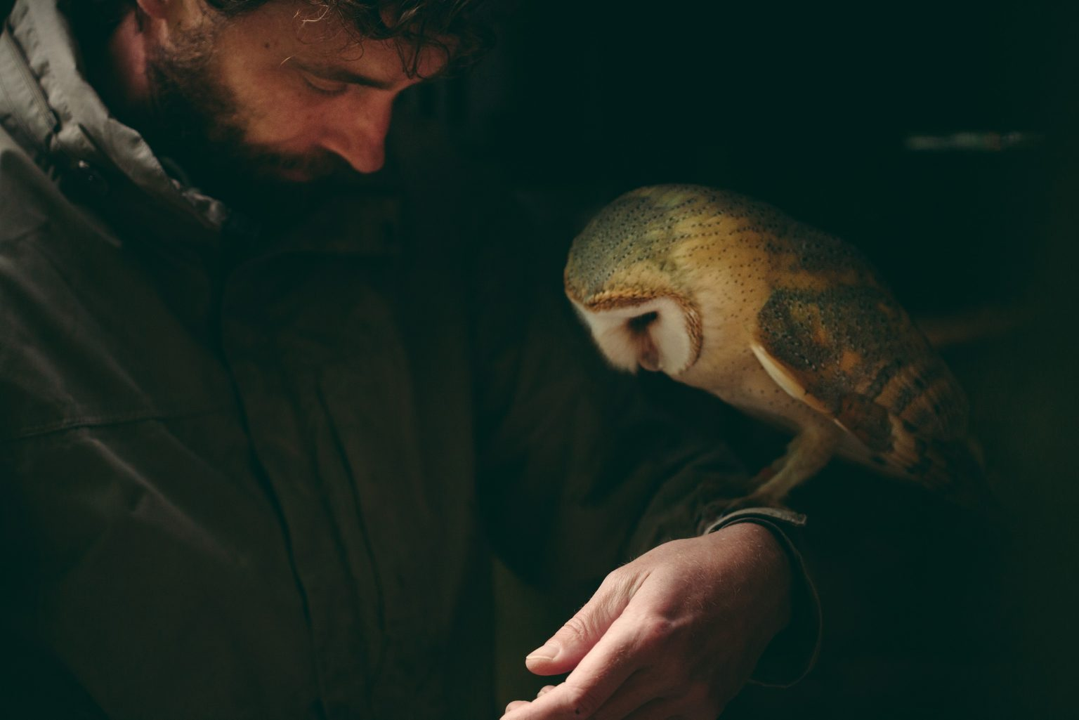 Bonneuil-Matours, France, May 2017 - La Maison Neuve. In the morning, after the daily weighing ritual, Tristan and the barn owl Boubo take time to be together. >< Bonneuil-Matours, Francia, maggio 2017 - Al mattino, dopo il rituale della pesata quotidiana, Tristan e il barbagianni Boubo si prendono del tempo per stare insieme.*** SPECIAL   FEE   APPLIES *** *** Local Caption *** 01489308