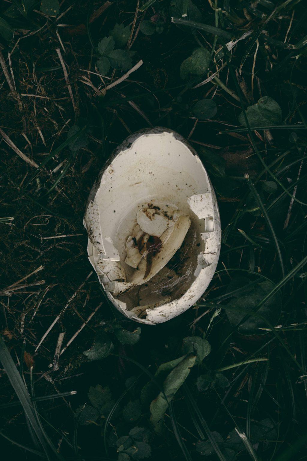 Bonneuil-Matours, France, May 2017 - La Maison Neuve. One of the unfertilised eggs of the white stork Mildred, fallen from her nest. >< Bonneuil-Matours, Francia, maggio 2017 -  La Maison Neuve. Una delle uova non fecondate della cicogna bianca Mildred, caduta dal nido.*** SPECIAL   FEE   APPLIES ***