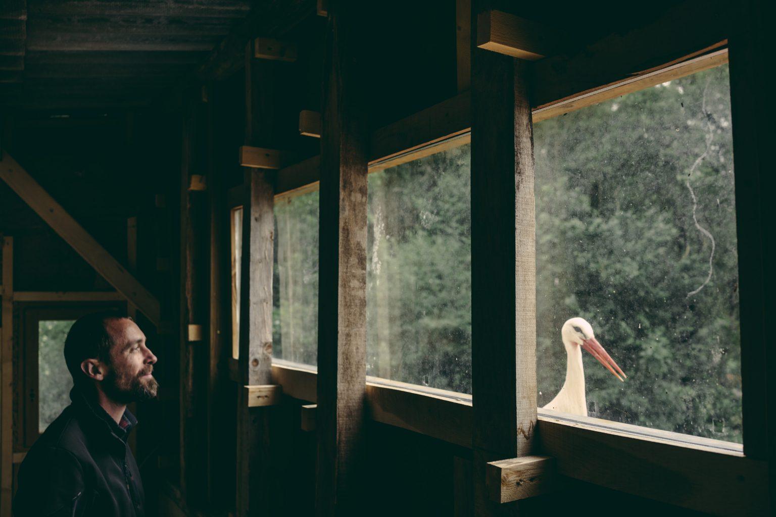Valdivienne, France, May 2019 - Tristan Plot and the stork Mildred look at each other through the windows of Tristan's future bedroom in the new house still under construction. Tristan has designed the roof so that it can be seen from the room, and has placed Mildred's nesting platform next to the balcony. ><  Valdivienne, Francia, maggio 2019 - Tristan Plot e la cicogna Mildred si guardano l?un l?altro attraverso le finestre della futura camera da letto di Tristan, nella nuova casa ancora in costruzione. Tristan ha disegnato il tetto in modo che si possa vedere dalla stanza, ed ha posizionato la piattaforma per il nido di Mildred accanto al balcone.*** SPECIAL   FEE   APPLIES ***