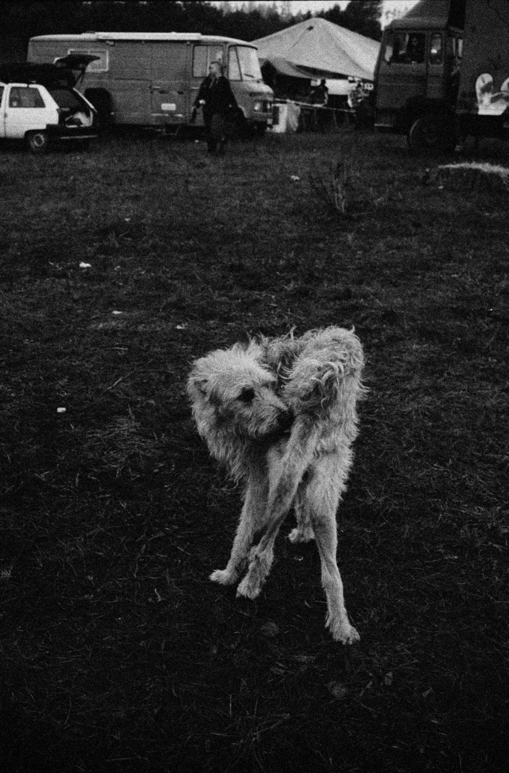 London, 2004 - Unknown Raver Dog at an outdoor Squat Party. >< Londra, 2004 - Un cane in uno Squat Party all'aperto.