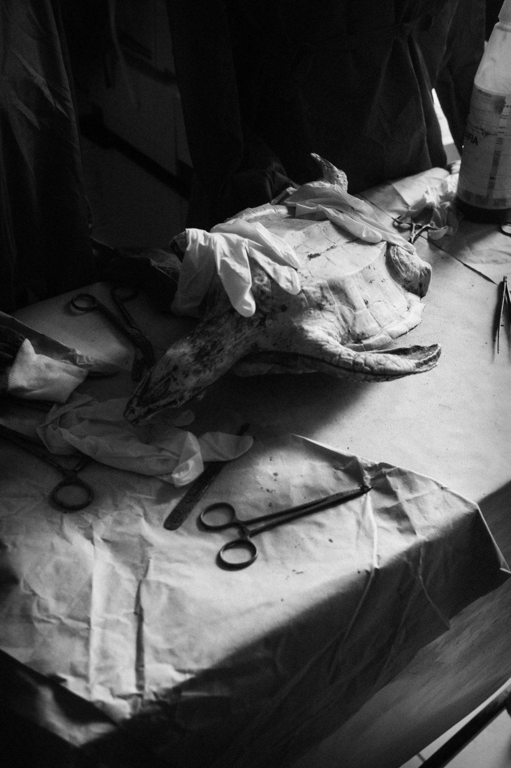 Lampedusa, February 2014-Lampedusa is the southernmost island of Italy, it is small and has only 6,300 inhabitants. Today it is one of the most important gateways to Europe.The inhabitants have been welcoming human beings in search of life for 20 years with great solidarity. They are a small community that has great respect for human dignity and, above all, has shown that peaceful coexistence can be established between human beings. Simple people, but with a soul as deep as its sea, who in the face of despair were not afraid and stretched out their hands.For this reason, the island has been nominated for the NOBEL for peace, a fair recognition for the people of Lampedusa, who have been involved for years in welcoming migrants. Migrant reception center.    Lampedusa, Febbraio 2014-Lampedusa è l'isola più a sud d'Italia, è piccola e conta solo 6.300 abitanti. Oggi è uno dei più importanti accessi all'Europa. Gli abitanti,, da 20 anni accolgono esseri umani in cerca di vita con grande solidarietà . Sono una piccola comunità che ha un grande rispetto per la dignità umana e, soprattutto,  ha dimostrato che tra essere umani si può attuare una convivenza pacifica. Persone semplici, ma con un animo profondo come il suo mare, che di fronte alla disperazione non hanno avuto paura ed hanno teso le  mani. Per questo, l'isola, è stata candidata al NOBEL per la pace, un giusto riconoscimento per la gente di Lampedusa, impegnata da anni nell'accoglienza di migranti. Centro accoglienza migranti.