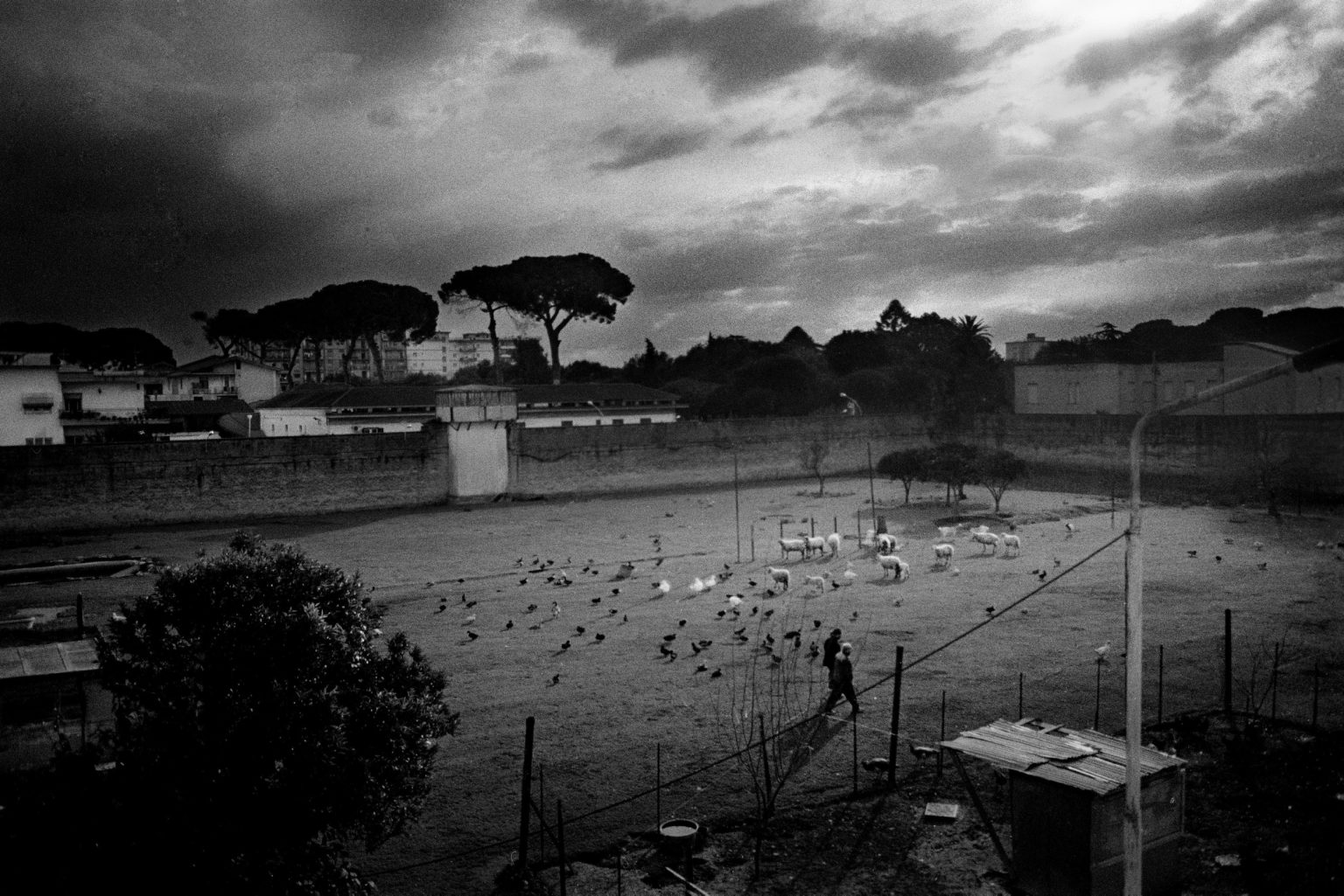 """Aversa ( Caserta ), January 2007 - The Judicial Psychiatric Hospital """"Filippo Saporito"""" - Aerial view of the green area in which some selected inmates are responsible for land cultivation and cattle breeding"""