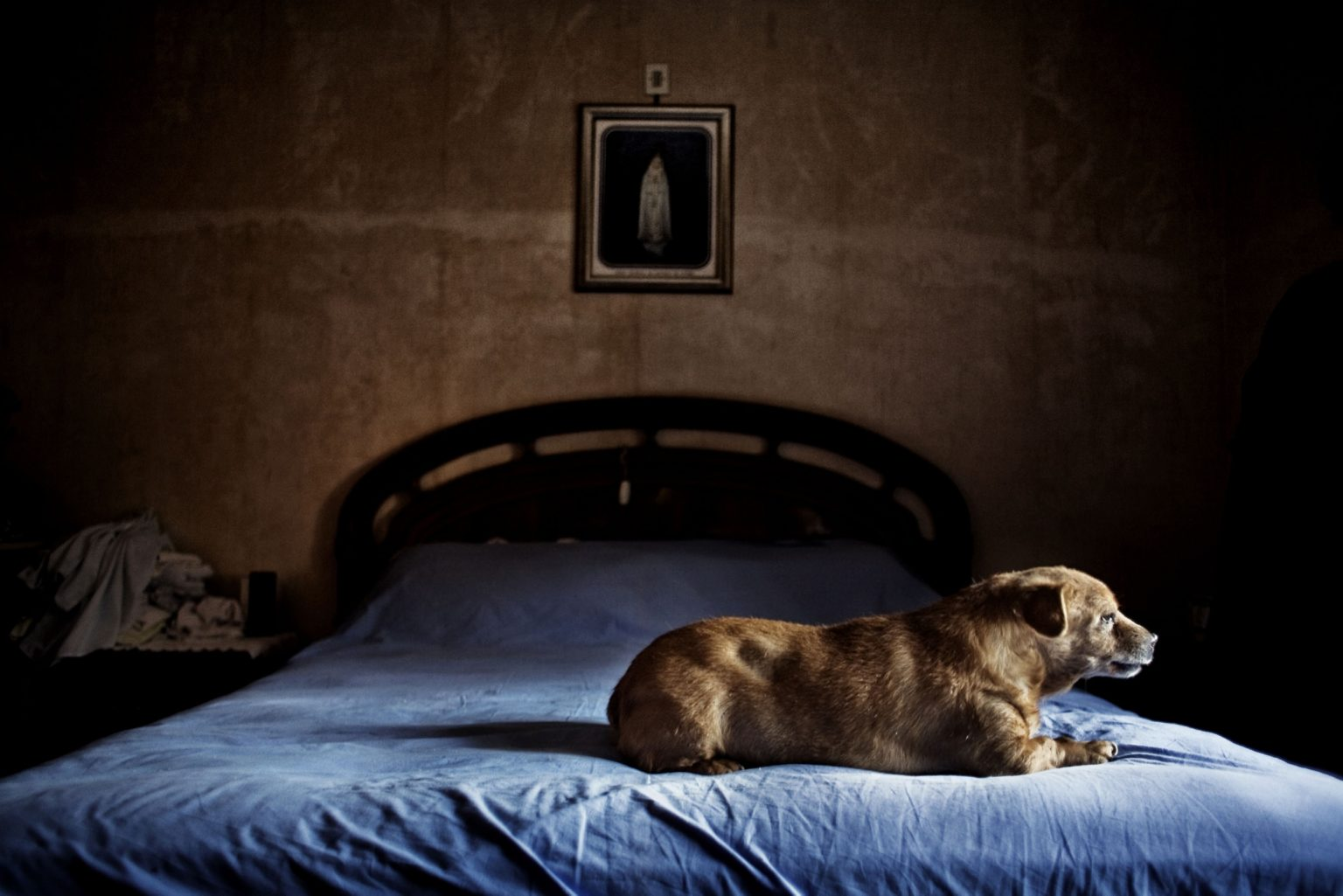 San Cesareo (Rome), June 2008 - The  dog of Angela, a girl suffering from a serious obesity