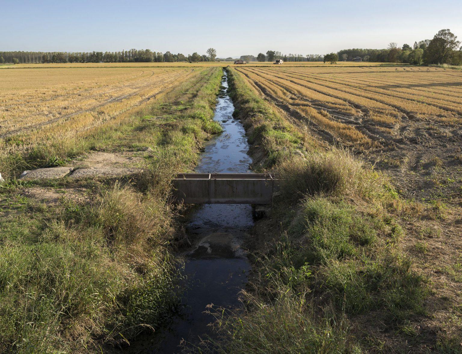 Morimondo (Milano), October 2017 - A canal used for irrigation in a paddy field. >< Morimondo (Milano), ottobre 2017 - Un canale irriguo in una risaia.  *Stitched Image**** SPECIAL   FEE   APPLIES *** *** Local Caption *** 01127390