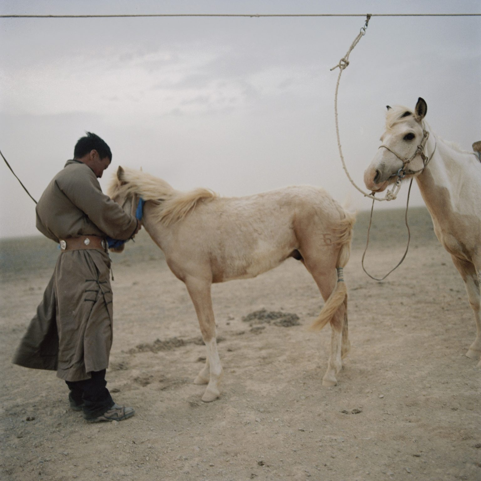 Tuvshinbayar is tying his horses to prevent them from escaping during the sand storm. The horses are primarirly used for the races which take place during the Naadam festival and they are ridden by the kids. Omongovi, 2012