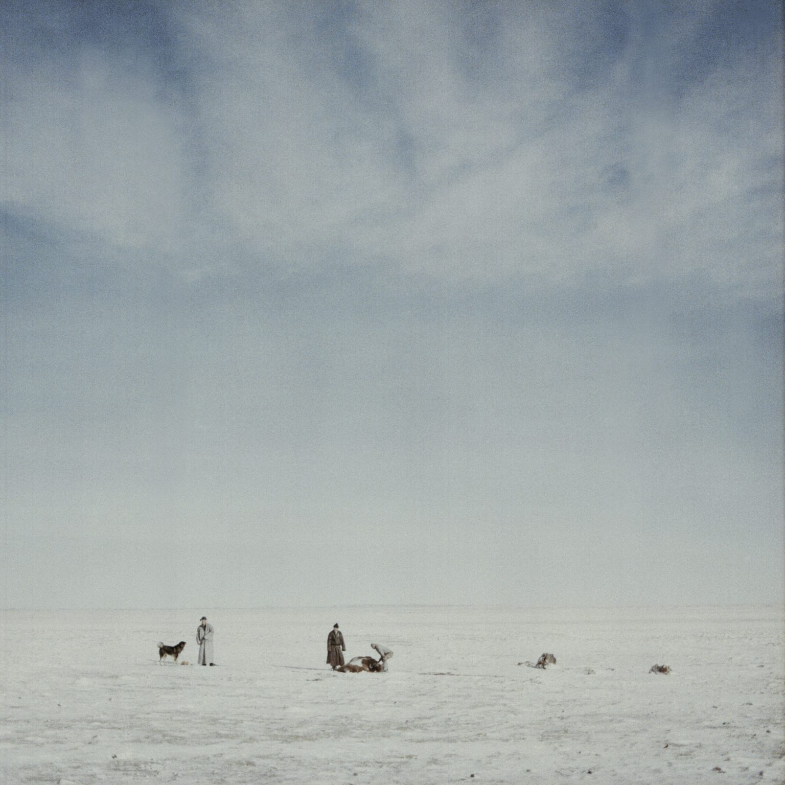 Mongolia, Gobi, Omongovi, 2013